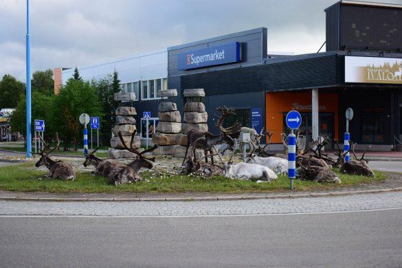 soby na kruhovom objazde v Laponsku, Fínsko